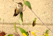 I love hummingbirds / by Don't Have One