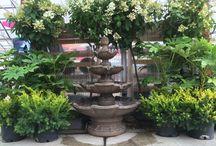 Displays / Arrangements, statuary, and garden feng shui.
