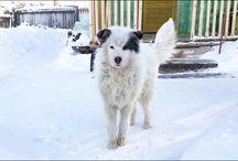 Dog stories/Kutyás történetek / Dog stories/Kutyás történetek. Web:cutieflower.com ; webáruház: www.cukorvirag.com