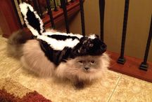 Pet Costumes / Favorite Halloween costumes for furry friends