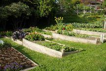 vege garden on a hill
