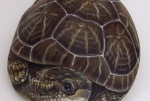 Turtles-painted rocks