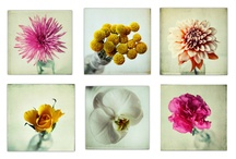 Flower and still life photography / Beautiful images of plants, for colour and structure.