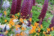 """RHS Chelsea Flower Show / Tradiční, zahradnická výstava, největší svého druhu v Británii dává prostor začínajícím i ostříleným zahradním architektům, aby navrhli na předem dané ploše malou """"zahradu"""". Výstavu doprovází stánky se zahradnickým nářadím, květinové obrazy či dekorace."""
