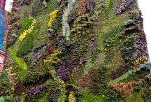 Verticale gardening / Tuinieren