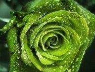 yeşillll