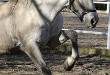 Splendides chevaux