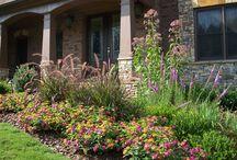 Annual and Perennial Flower Gardens