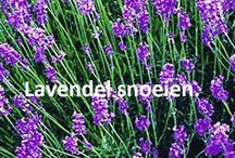 My garden, how to maintain my garden plants