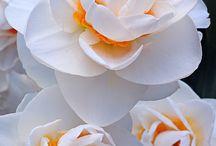 Flowers / Spring