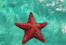 stella marins