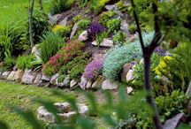 Skalka,zahrada