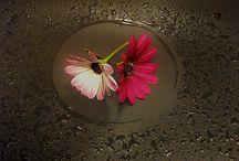 """Flowers / """"Observa las flores del cerezo, podrías dedicar tu vida entera a la búsqueda de una sóla y no habrías desperdiciado tu tiempo. Perfectas, simplemente perfectas.  Mi jardín es mi más bella obra de arte. Todo lo que he ganado ha ido a parar a estos jardines. Todo el mundo discute mi arte y pretende comprender, como si fuera necesario, cuando simplemente es amor.  Claude Monet"""