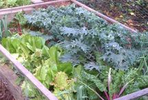 Gadening saladboxs