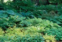 Shade Garden designs