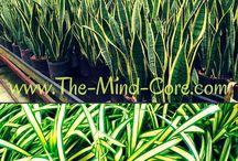 φυτά οξυγονο