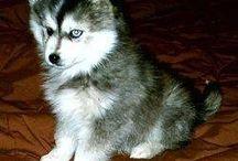 Puppies I want