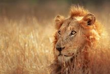 Kruger Park / A great all-rounder park: easy to access, great tourist facilities and Big Five almost guaranteed. http://www.secretearth.com/destinations/232-kruger-national-park