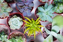 succulents for me