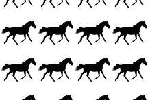Szülinapra lovas