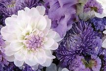 Ładne kwiaty