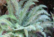 PNW Restoration Forested Slope