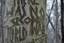 Perry Point Tree Carvings