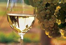 Wine / Vini
