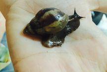 Snail achatina Achatschnecke Schnecke