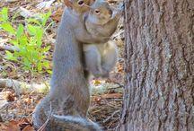 scoiattolini