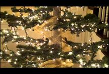 Christmas tree light / by Sonia Moreno
