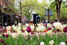Spring festivals