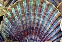 sea shell & coral