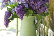 FLORI ARANJAMENTE FLORALE - beautiful flowers