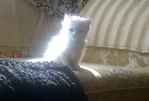 Chatons - Kittens