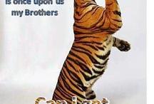 L S U  / Tiger fan tiger crafts