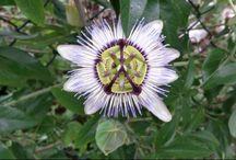 Bloemen/Flowers