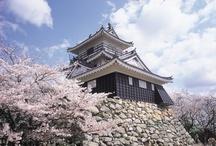 Shizuoka, Japan