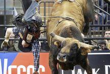 Bull riding/rodeo / by Cody Burkhart