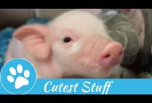 Cutest Stuff / Cutest Compilations on Internet