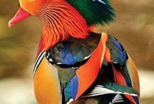 Kuşlar özgürlüğün simgesi
