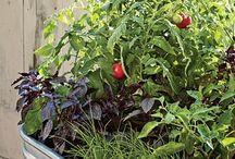Veggie garden pot