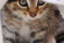 derűs, aranyos képek / sok édes pici állatokról