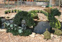 Topiaries / Animal topiaries planted at River Street Flowerland