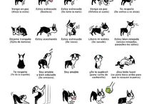 Pets<3