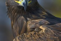 Nature Photography Eagle