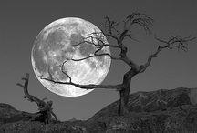 Moon & Night ☽