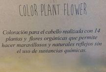 Colour Plant Flower