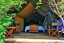 Tented Camping Yala / Living in a luxury tent in Yala National Park of Sri Lanka