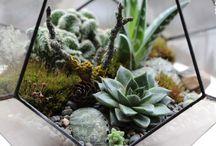 Florariums
